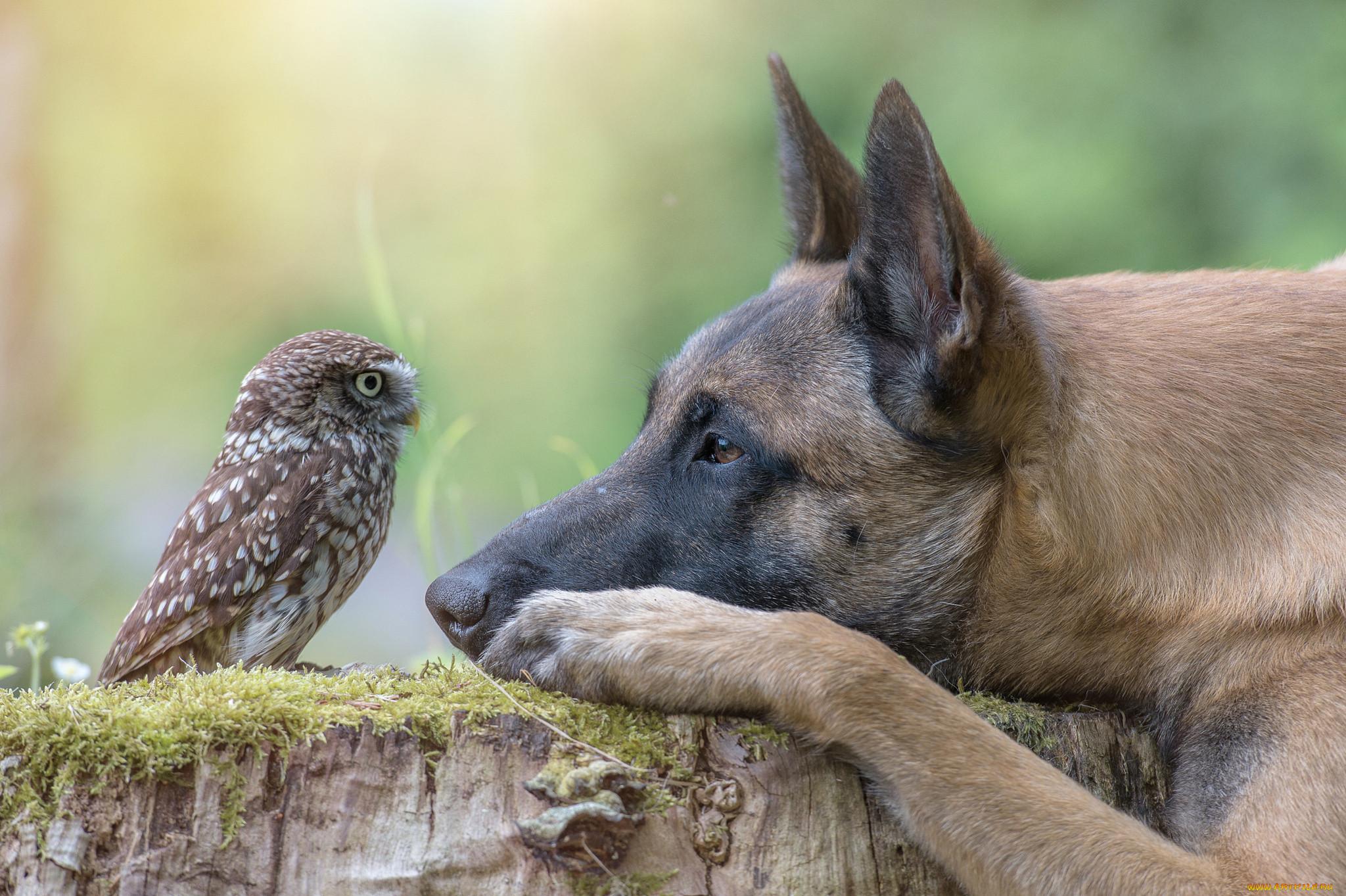 фотки дружбы животных озеро интересное тихое